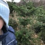 Tannenbaumschlagen 2018