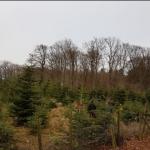Tannenbaumschlagen 2019